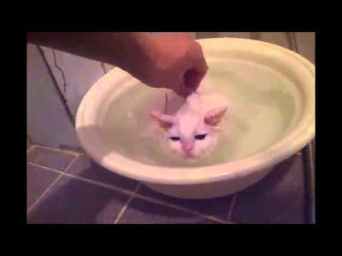 Kitten Refuses to Leave Warm Bath