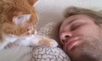 'Cat Alarm Clocks' Are The Best Alarm Clocks