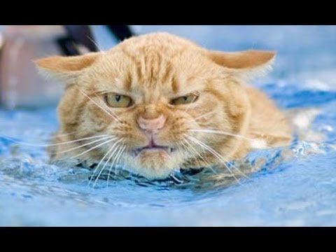 Funny cats in water