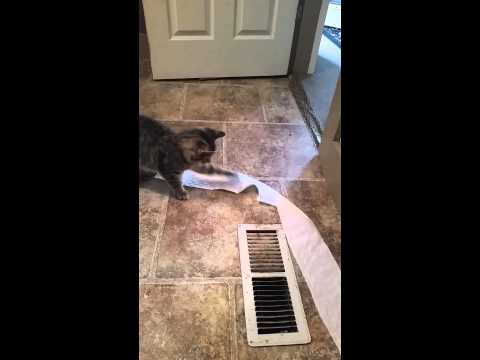 Naughty Cat Steals Toilet Paper