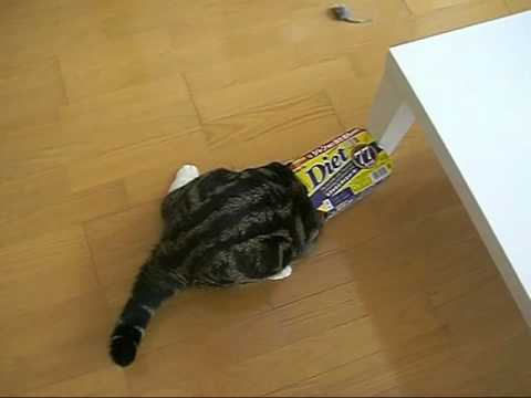 Cat Vs. Box Like You've *Never* Seen Before. HYSTERICAL!