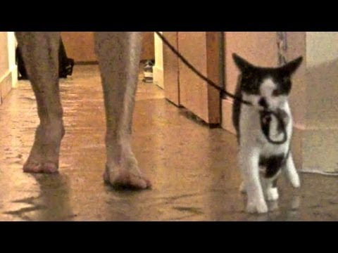 How to Walk Your Human: Basic Tutorial for Cats