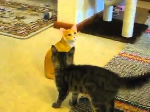 This kitty just could not understand why his new friend would not play with him