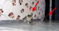 Kitty Chases Combined With Racing Audio Is The Best Thing Ever.