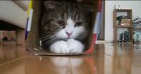 Meet Maru. The Cutest Cat On The Internet.