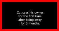 Cat Sees Owner After 6 Months. If You Love Cats, You'll LOVE This!