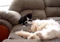 Cutest Video of a Naughty Kitten Annoying a Sleeping Cat