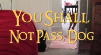 You Shall Not Pass, Dog