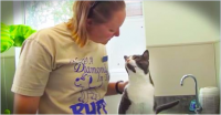 This Kitty Sure Knows The Secret To Keep His Human Happy. I Sure Wish My Cat Did THIS!