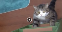 Cats Are Good At Climbing Ladders, And They Are So Cute Too