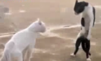 This Is One Of The FUNNIEST Cat Videos I've Ever Seen! HYSTERICAL!