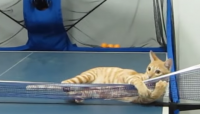 This Cat Can Play Ping Pong Better Than You