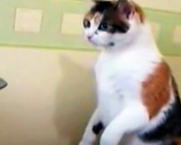 catprinter_580x304
